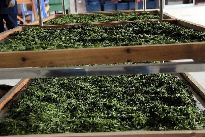 藏茶和黑茶的区别图片